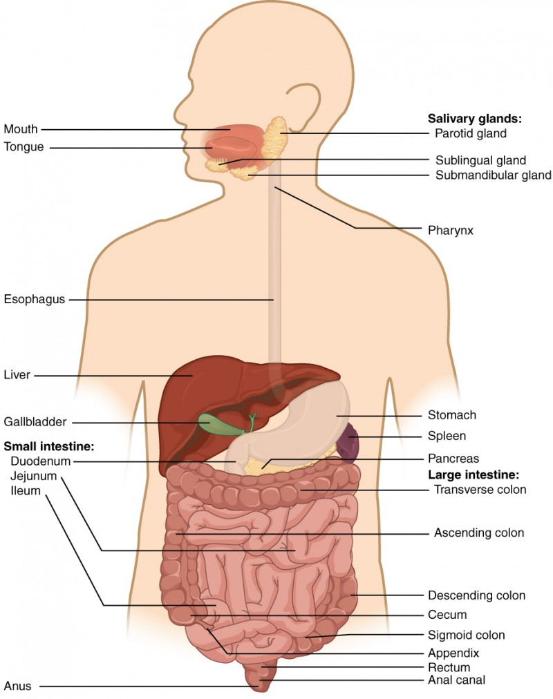 Human Body Overview