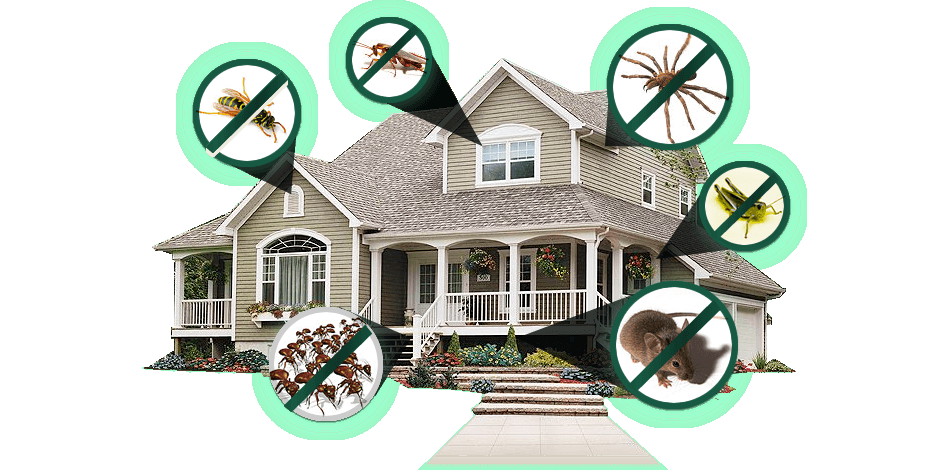 pest control at home