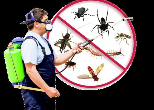 Pest Control Cost In Australia